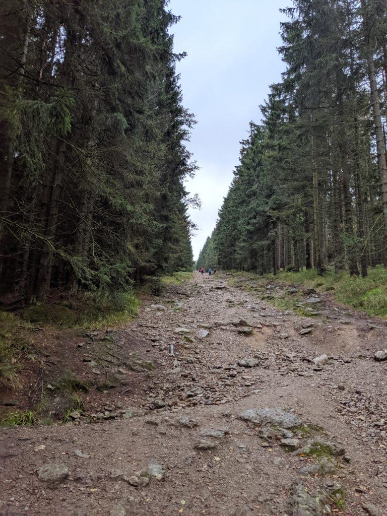 Turistická cesta ze Špičáku na Černé jezero
